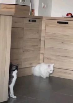 Funny Cute Cats, Cute Cat Gif, Cute Cats And Kittens, Cute Funny Animals, Cute Baby Animals, Gato Animal, Soft Kitty Warm Kitty, Talking Animals, Cool Pets