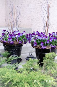 The pansies I bought are a new variety known as the Cool Wave(R). As you can see my outdoor planter is filled with pansy blooms. They will fill up a garden bed if you want them to grow in a creeping pattern on the ground. Or they even grow as a trailing plant