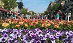 Flowers on Main Street #Disneyland
