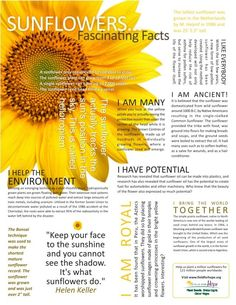 Sunflower Facts Keep your face to the sunshine and you can not see the shadow. Sunflower Facts, Sunflower Quotes, Sunflower Pictures, Sunflower Tattoos, Sunflower Tattoo Meaning, Sunflowers And Daisies, Growing Sunflowers, Sun Flowers, Dwarf Sunflowers