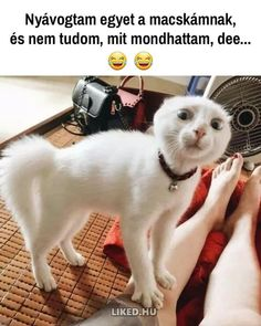 Cute Cat Memes, Funny Animal Jokes, Crazy Funny Memes, Really Funny Memes, Funny Animal Videos, Cute Funny Animals, Funny Cats, Cute Kitten Meme, Funny Animal Sayings