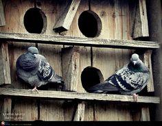 Vor fi mereu amandoi Stone Fox, Romania, Childhood, Bird, Outdoor Decor, Home Decor, Style, Swag, Infancy