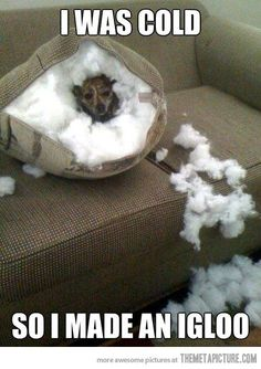 reminds me of cujo anim, laugh, dogs, stuff, cold, pet, igloo, funni, thing