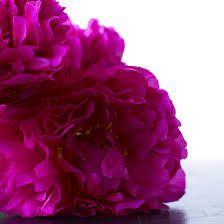 fuschia color - Пошук Google