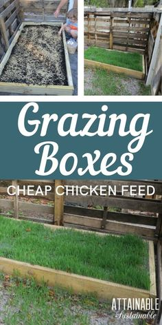 DIY grazing boxes make for happy grass fed chickens. They're a great way to save on the cost of raising backyard chickens (and other poultry), too!