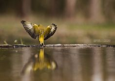 I beleive i can fly by Gergely Csigo on 500px