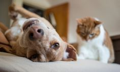 If your dog is keeping you from a good night's rest, it may be your own fault