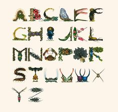 Stunning Insect Alphabet Illustrations by Paula Duta