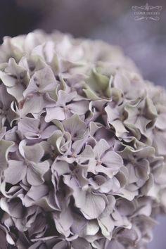 mauve fleur