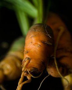 Carrots photographer Adrianna Mullen