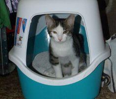 Ich habe es mal wieder verschwitzt das gewohnte Katzenstreu zu kaufen. Ich dachte, ich habe noch welches im Keller aber nix.