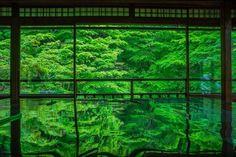緑が織りなす幻想的な世界。2ヶ月間だけの幻「瑠璃光院」の青紅葉が美しすぎる   RETRIP[リトリップ]
