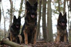 Jardan, Esra en Cuanta Husky, Dogs, Animals, Animales, Animaux, Pet Dogs, Doggies, Animal, Animais