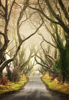 "The Dark Hedges by Pawel Klarecki on 500px  ""The Dark Hedges are an avenue of a beech trees that are a couple of hundred years old in Armoy, Co. Antrim. The trees intertwine in the middle of the road giving the scene a magical ethereal look.""  Northern Ireland 