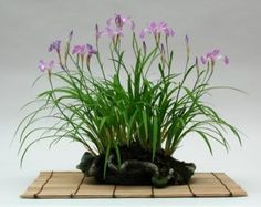"""If this is a plant, the correct term should be shitakusa, which is translated from the Japanese into: shita = below or under, and kusa = grass.    In the last 20 years or so, related or new art forms have developed:    Kusamono, which literally means: kusa=grass and mono=thing. Kokedama, which literally means koke=moss and dama=ball  Nearai, which literally means Ne=Root,arai=washed"""""""
