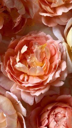 Muticolor Flowers | Wholesale Flowers