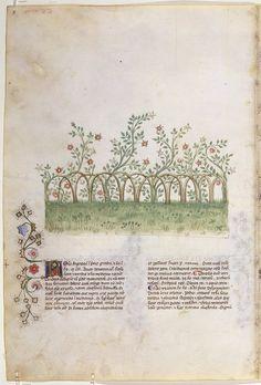 """""""Historia Plantarum"""" (""""О растениях"""") представляет собой естественно-научную энциклопедию, содержащую изображения животных, растений и минералов с описанием их медицинских свойств — в полном соответствии с традицией tacuina medievali (средневековых медицинских справочников), которым рукопись обязана своим наиболее известным названием, """"Tacuinum sanitatis"""". Оригинал данной работы, """"Taqwim al-Sihhah"""" (""""Сохранение здоровья""""), был создан в XI веке багдадским врачом Ибн-Бутланом"""