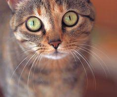 my  bella cat