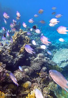 Aqaba, Jordan.  Not only is Aqaba an ideal stop on the way to Petra and Wadi Rum, this resort town on the Red Sea offers spectacular snorkeling and diving.