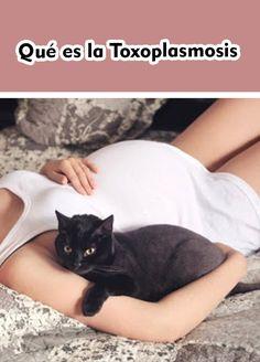 Qué es la Toxoplasmosis  #Gato #Gatos #Mascotas Animals, Animals And Pets, Kittens, Hipster Stuff, Women, Animales, Animaux, Animal, Animais