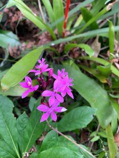 Australian Plants, Backyard, Yard