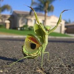Amazing and funny pictures and videos from around the world: funny animals, beautiful nature scenery, universe etc, etc, etc. Funny Animals, Cute Animals, Funny Cows, Green Animals, Wild Animals, Cool Bugs, Fotografia Macro, A Bug's Life, Life 2016