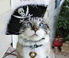Cross-Eyed Cat Likes To Dress Up #IncredibleThings