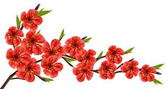 Red Spring Branch PNG Clipart Image