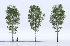 Free 3d models – Trees   Viz-People
