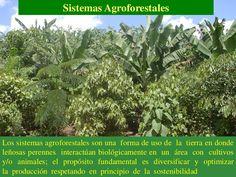 Sistemas AgroforestalesLos sistemas agroforestales son una forma de uso de la tierra en dondeleñosas perennes interactúan ...