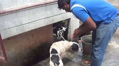 how to give pet dogs bath by a professional 2