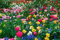 as-flores-e-o-significado-blog-usenatureza