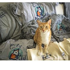 I'm feeling that it's time to say enough is enough and we need to end declawing. Don't you think so? Let's spread the word in any way we can that declawing is totally wrong, unnecessary, and inhumane. Many of you have asked and here's a way to wear or carry the message with my new batch of very soft t-shirts or awesome tote bags. One side with me on it and the other side with The Paw Project on it. Win, win if I do say so myself . Thank you for helping us. Even if you save just ONE kitty…