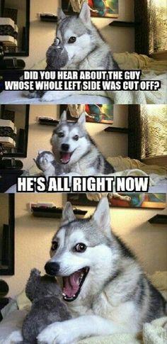Pun dog - funny memes                                                                                                                                                                                 More