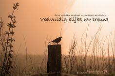 Elke morgen schenkt hij nieuwe weldaden. – Veelvuldig blijkt uw trouw! Klaagliederen 3:23  #Goedheid, #Trouw  https://www.dagelijksebroodkruimels.nl/klaagliederen-3-23/