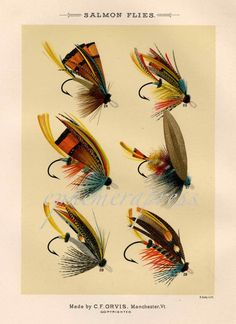 this is a great graphic image showing a selection of salmon flies as titled in english at the top of the print  the image was originally depicted