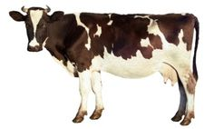 11 Reasons to Stop Eating Dairy  http://www.care2.com/greenliving/11-reasons-to-stop-eating-dairy.html