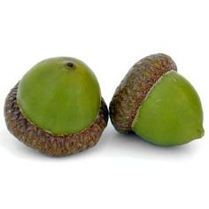 love green acorns