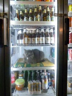 Some animals are just a little cooler than the rest : theCHIVE