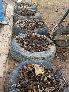 Planting potatoes in old tires... and a good blog