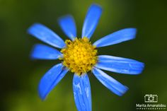 Blue Flower By Marita Amanatidou Photography
