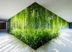Impressive Climber and Creeper Wall Plants Ideas 12