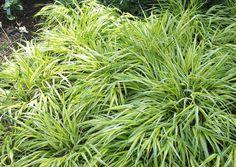 Így legyen a kerted árnyékos része is buja és virágzó Chinese Garden, Landscaping Plants, Lemon Grass, Light Shades, Herbs, Backyard, Landscape, Outdoor, Gardens