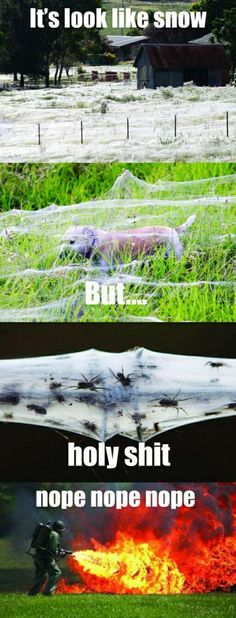 Laugh till you cry! -- This Farm Should Be Burned, I Got Evidence // funny pictures - funny photos - funny images - funny pics - funny quotes - Funny Cute, The Funny, Funny Images, Funny Pictures, Haha, Humor Grafico, Funny Posts, Laugh Out Loud, I Laughed