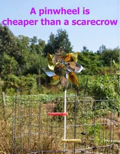 Learn how to keep birds out of vegetable garden