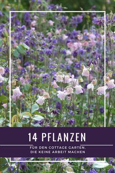 Flora, Herbs, Joy, Gardening, Gardens, Lawn, Plants, Patio, Flower Beds