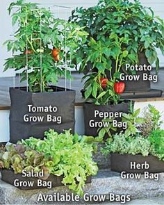 Grow bags. Pretty cool idea, especially for square foot gardening.