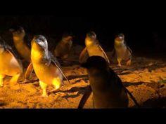 Home - Low Head Penguin Tours