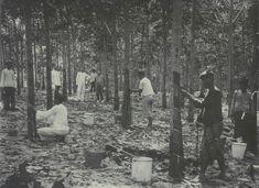 Het tappen van rubber op een Javaanse onderneming. 1885-1920