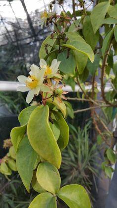 Dag 317/365 Tussen cactus en bladplant in